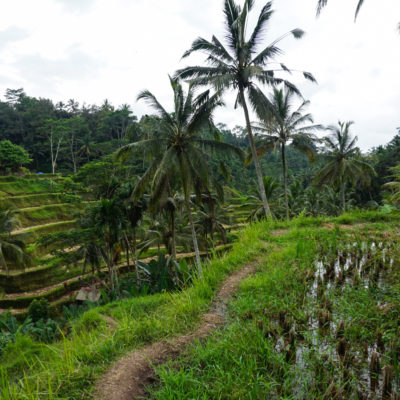 043: Att resa till Bali