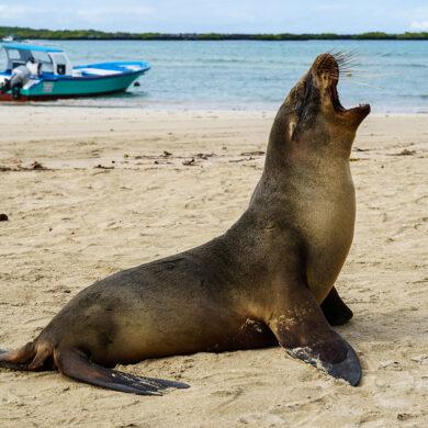 att resa till Galapagosöarna
