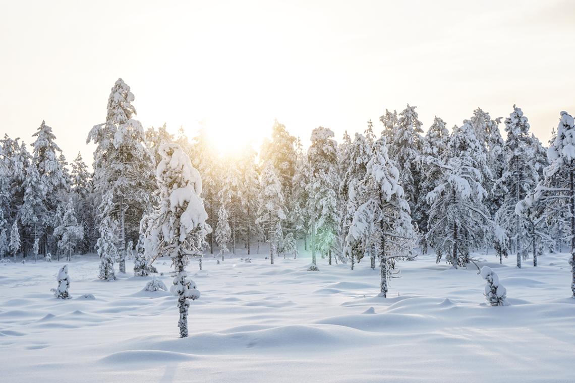 att göra i dalarna vintertid